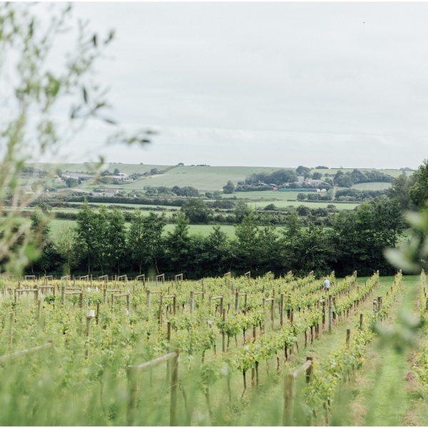 Romantic English Vineyard Inspiration Shoot